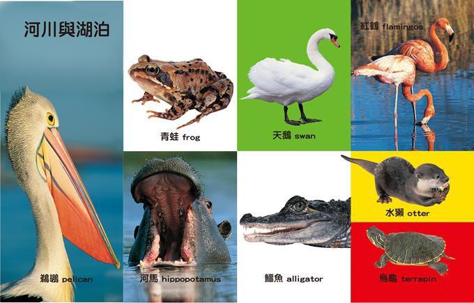 First100有趣動物