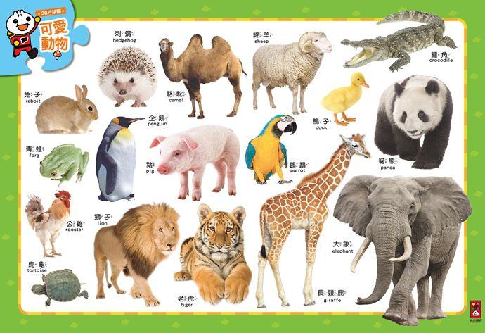 可愛動物-聰明寶寶大拼圖-FOOD超人