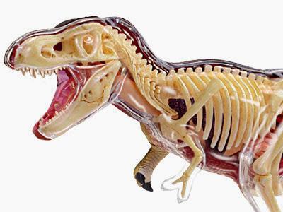 暴龍T-REX解剖模型(26092)